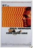 1937-cool-hand-luke-1967-movie-poster
